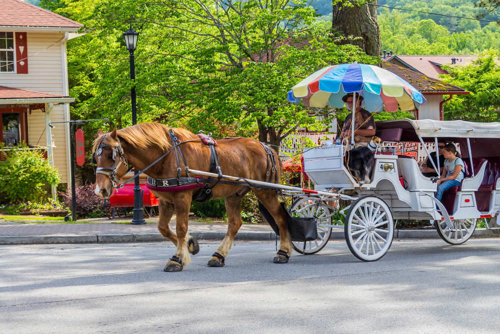 Helen Carriage Rides